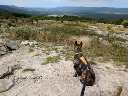 Canaan Valley Overlook