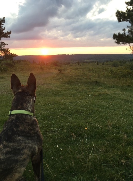 Reagan and the Sunset
